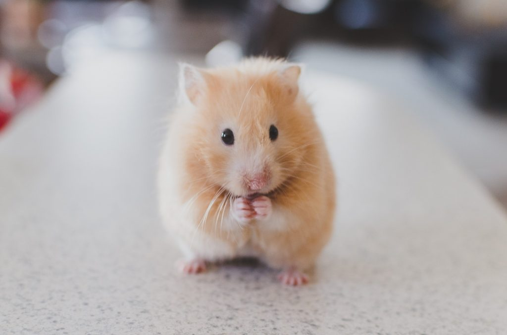 hamster care philadelphia PA