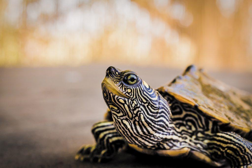 turtle care philadelphia PA