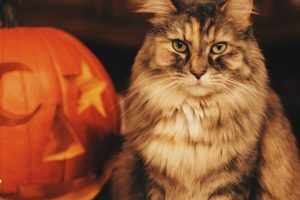 Tips To Help Your Pet Stay Calm During Halloween